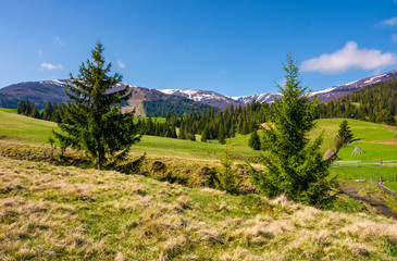 beautiful Carpathian countryside in springtime