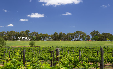 Swan River Vineyard, near Perth, Western Australia