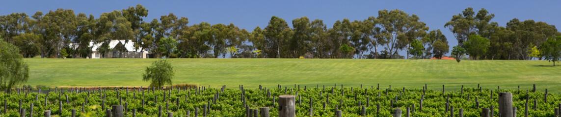 Swan River Vineyard Panorama, Perth, Western Australia