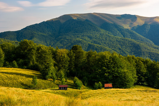 two woodshed near the forest in mountains. beautiful summer scenery in evening. location Apetska mountain, Ukraine