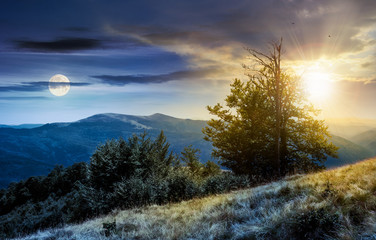 time change concept  tree on the grassy hillside. lovely summer landscape of Carpathian mountain Svydovets ridge with sun and moon.