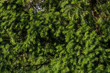 Fir tree pattern