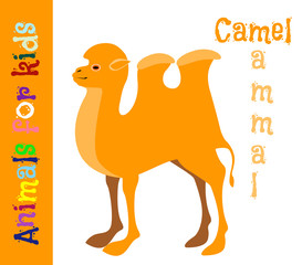 Camel. Mammal. Animals for children. Cards for the development of the youngest children with the image of animals, birds, insects, reptiles. Vector. Color picture
