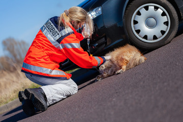German animal medic treats an injured dog. The german word Rettungsdienst means rescue service.