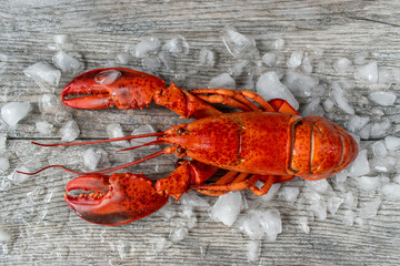 raw red lobster on ice and gray wooded surface flat lay