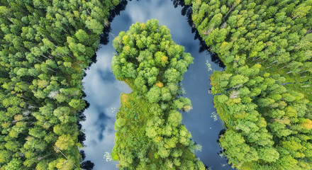 Aerial view on the forest and river. Beautiful natural landscape at the summer time