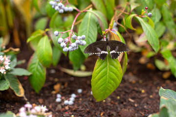 Butterfy on a plant