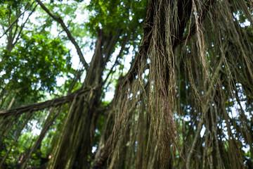 Tees at Ubud Monkey Forest