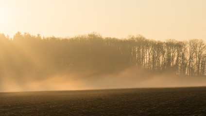 country landscape in the morning in the mist