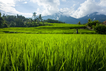 The Tegallalang Rice Terraces in Bali, Indonesia
