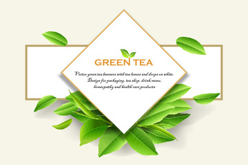 Vector green tea frame with tea leaves and drops on white background.
