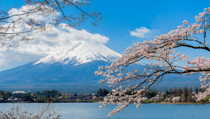 Mount fuji at Lake kawaguchiko with cherry blossom in Japan.