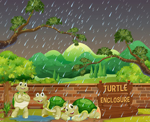 Zoo scene with three turtles in the rain