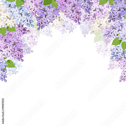 vector background with purple pink blue and white lilac flowers
