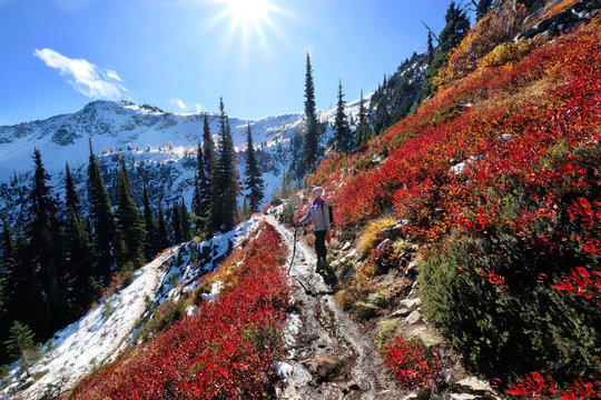 Vacation in Cascade Mountains. Young woman hiking along steep slope covered with red huckleberry bushes and snow in North Cascades National Park. Maple Pass near Seattle. Washington. United States.
