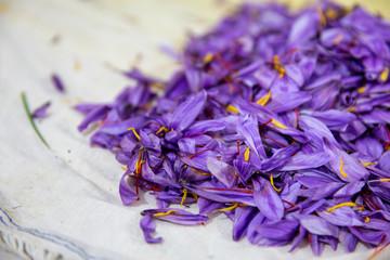 Saffron in Bardaskan, Khorasan, Iran