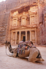Camel near the Treasury. Petra. Jordan landmark