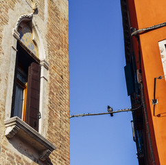 Pigeon sitting on a wire between two buildings in Venice, Italy.