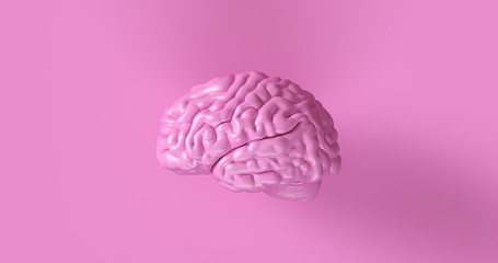 Pink Human brain Anatomical Model 3d illustration