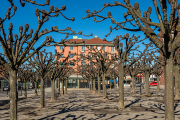 City square with many pruned trees and building early spring.