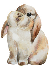 Rabbit. Watercolor illustration isolated on white background.