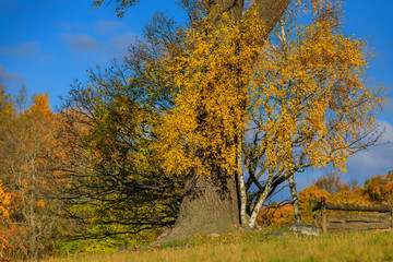Fall landscape with fields of yellow grass and colorful leaves on the trees outside Stockholm