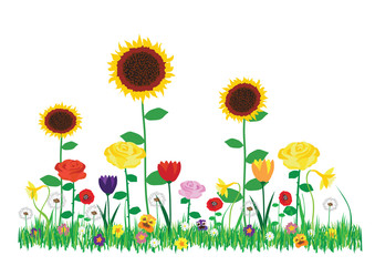 Color vector spring and summer flowers collection. Cartoon illustration of beautiful blooming garden flowers isolated on white background.