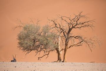 Antelope and trees in desert