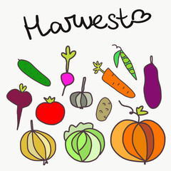 Vegetables and harvest background