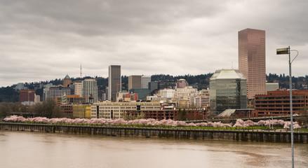 Downtown City Skyline Portland Oregon Willamette River Spring Blossoms