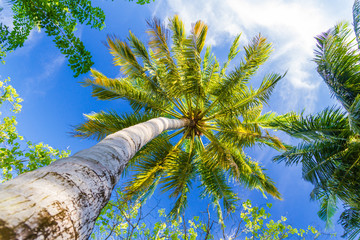 Green palm tree against blue sky on tropical background