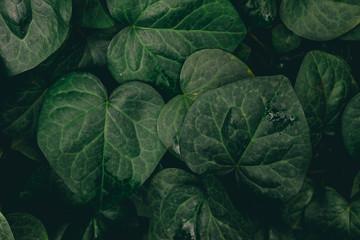 green leaves in light