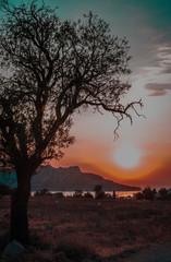 Tree silhouette on sunset background, Aegina, Greece