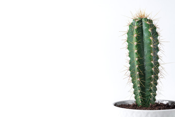 Foto op Plexiglas Cactus Cactus in a concrete pot on a empty wall