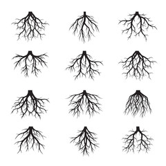 Black shape of  Roots. Vector Illustration and graphic element.