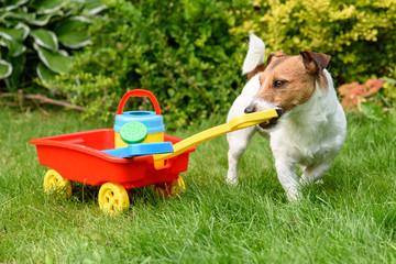 Cute farmer with toy wheelbarrow working at backyard garden