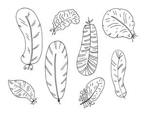 Hand drawn boho feathers set. Design elements collection. Vector illustration.