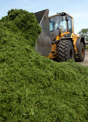 Forage drying industry. Grass drying. Shovel