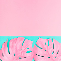 two pink tropical and palm leaves of monstera in vibrant bold color on dual turquoise background ....