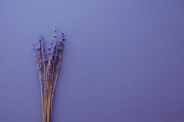 dry natural lavender flowers background