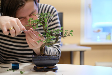 Foto op Plexiglas Bonsai A man forms the crown of a small ornamental bonsai tree
