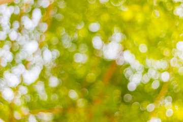 abstract blur of nature with the bokeh of light through the trees as a background image