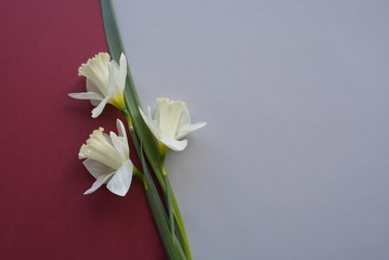 White flower on a colorful background.
