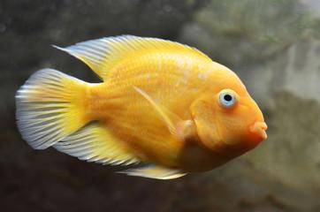 Рыба плывёт под водой.