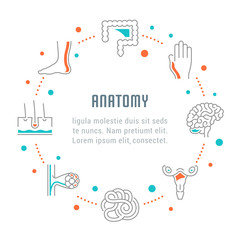 Website Banner and Landing Page of Anatomy.
