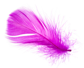 violet feather on a white background