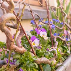 Blumenschmuck im Balkonkasten an der Hausfassade