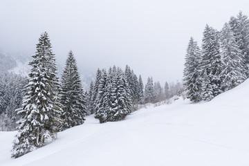 winter wonderland in Austria