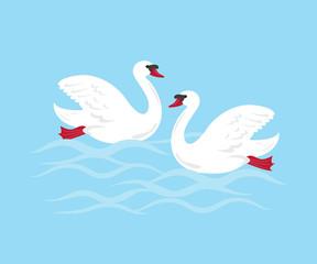 Cartoon swans on blue background.