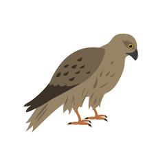 Cartoon falcon icon on white background.